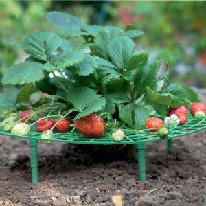 Set de 5 supports fruits (EN) - AIC International