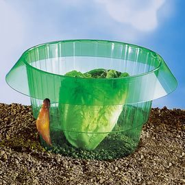 Lot de 4 protections à salade - AIC International