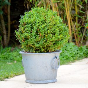 Galvanized flower pot N°2 13L - AIC International