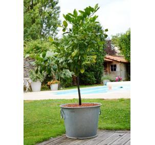 Bac planter zinc n 3 28l aic international for Jardin anglais que planter