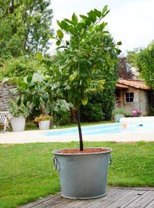 Galvanized flower pot N°3 – 28L - AIC International