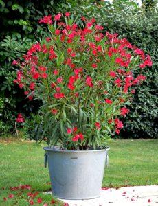 Galvanized flower pot N°5 – 110L - AIC International
