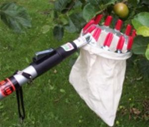 Collect fruits telescopic - AIC International