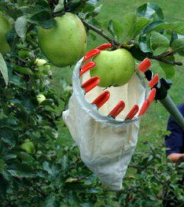 Ramasse fruits télescopique