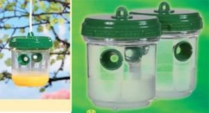 Set of 2 trap with wasps