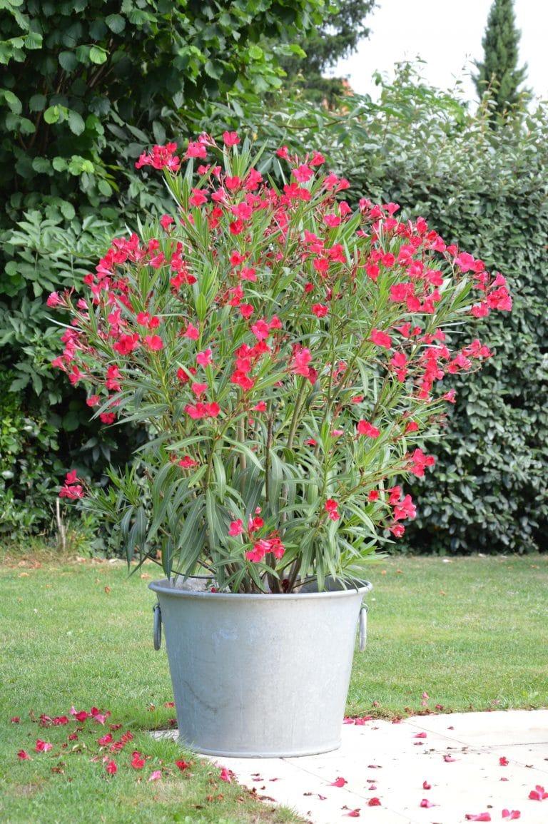 Le Zinc, toujours d'actualité dans les jardins et intérieurs !