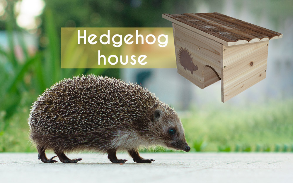 Hedgehog House: Protect the vegetable garden's ally!